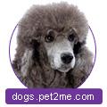 Объявления собаки, щенки в Красноярске: купить щенков
