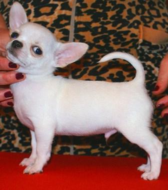 Доска объявлений ростов на дону маленькие породы собак подать бесплатно объявление в коломне
