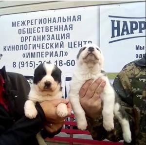 Клубы любителей собак в москве ночной клуб железногорск