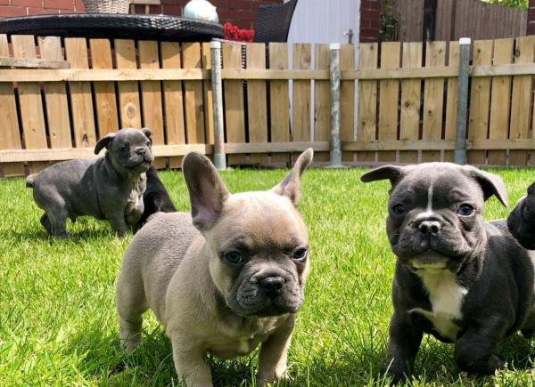 Dog breeders, dog kennels AKC And CKC puppies Available